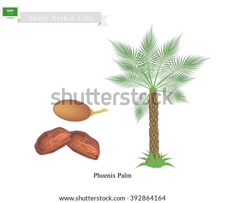 Saudi Arabia Tree, Illustration of Phoenix Palm. The National Tree of Saudi Arabia. - stock vector