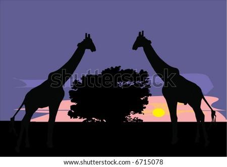 savanna illustration with giraffe and sunset - stock vector