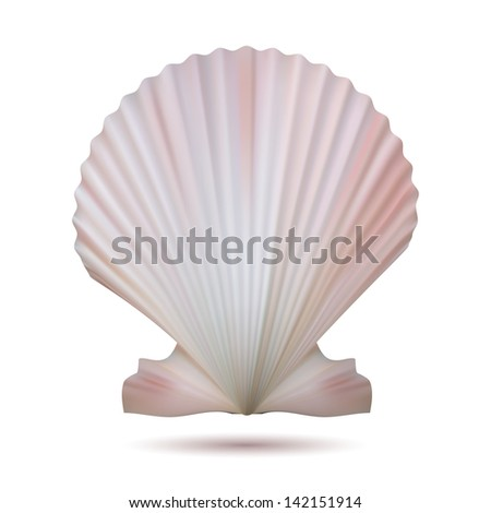 Scallop seashell isolated on white background. Vector illustration