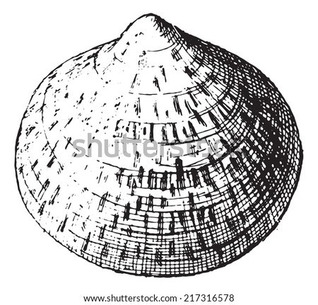 Scallop, vintage engraved illustration. Dictionary of words and things - Larive and Fleury - 1895. - stock vector
