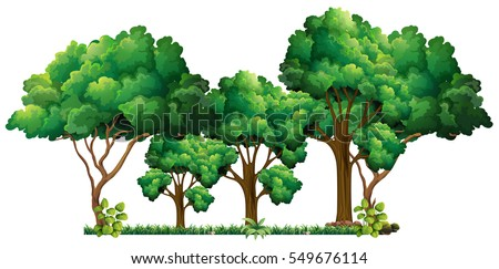 Scene with many trees illustration