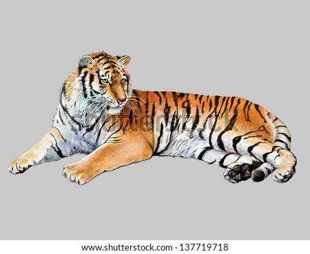 scetch colored drawing realistic illustration of tiger, isolated, vector version - stock vector