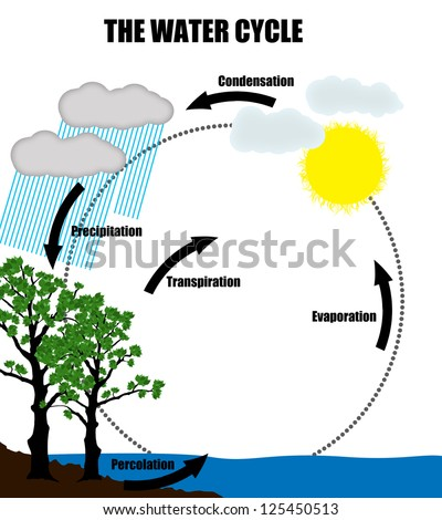 Schematic representation water cycle naturevector illustration stock schematic representation of the water cycle in naturevector illustration helpful for education ccuart Image collections