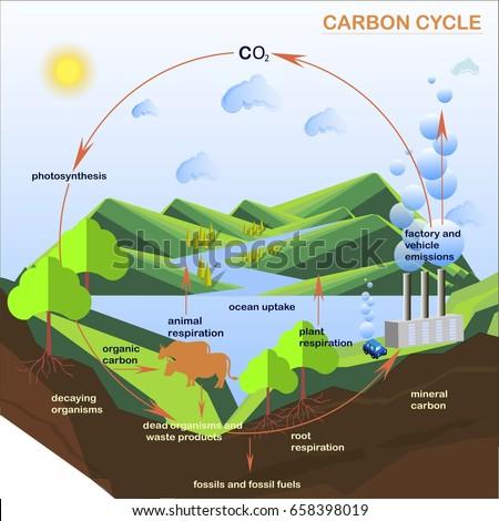 Scheme carbon cycle flats design stock em vetor stock 658398019 scheme of the carbon cycle flats design stock vector illustration ccuart Image collections