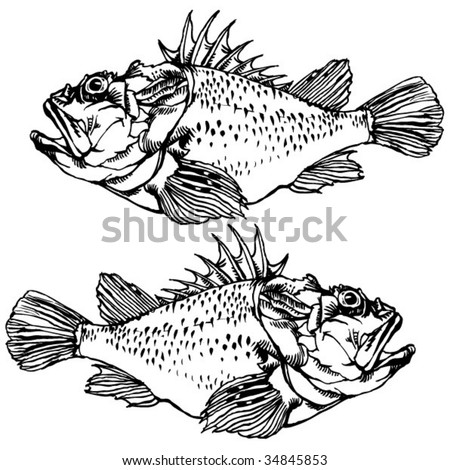 Scorpion Fish Drawing Scorpion Fish Drawing