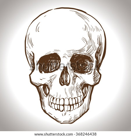 Scull Stock Images Royalty Free Images Amp Vectors