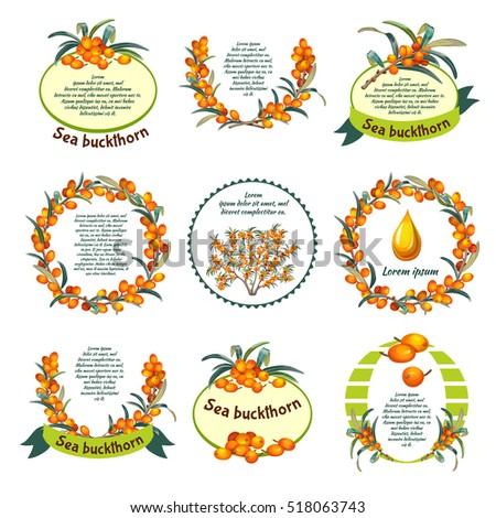 Sea buckthorn emblem set. Best price, natural product. Vector illustration