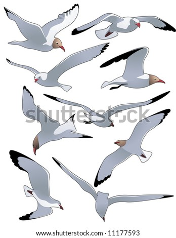 Sea gulls, vector illustration, EPS file included - stock vector