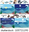 Sea scenarios with various marine animals - stock photo