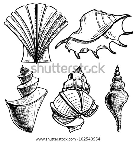 Sea shells collection. Hand drawing sketch vector illustration - stock vector