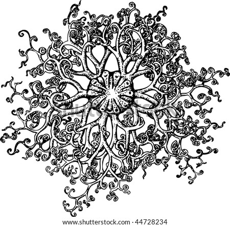 Sea Sponge Drawing Sea Sponge