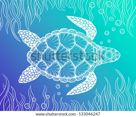 how to draw a turtle top view