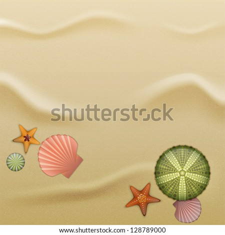 Sea urchin shells, starfish and scallop shells on sand. Illustration contains gradient mesh - stock vector