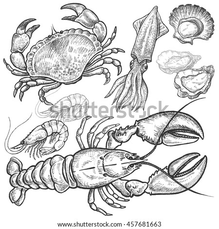 Seafood. Crab, lobster, squid, prawns, oysters, scallops. Hand drawn seafood set. Vector illustration. Isolated image on white background. Vintage style.