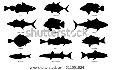 seafood silhouettes on the white background - stock vector