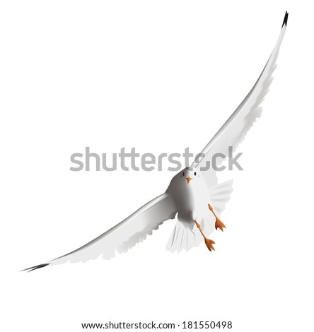 Seagull, flying in the sky with my wings - stock vector