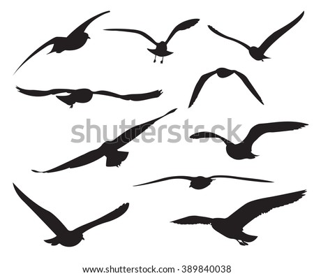 Seagull Stock Images Royalty Free Images Amp Vectors