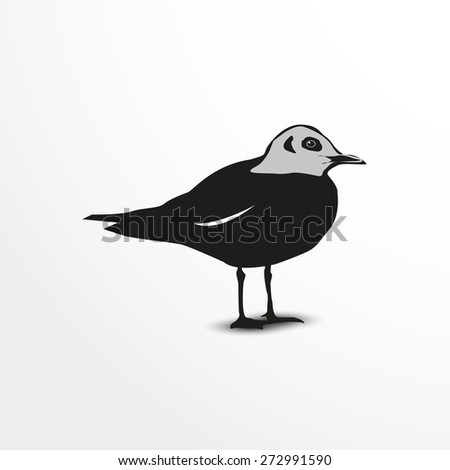 Seagull. Vector illustration. Animal collection. - stock vector