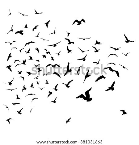 Seagulls black silhouette on isolated white background. Vector