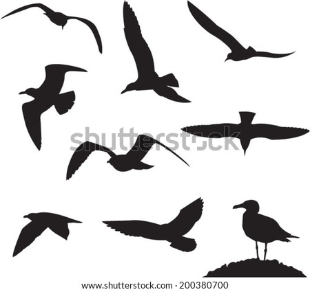 Seagulls on a white background  - stock vector