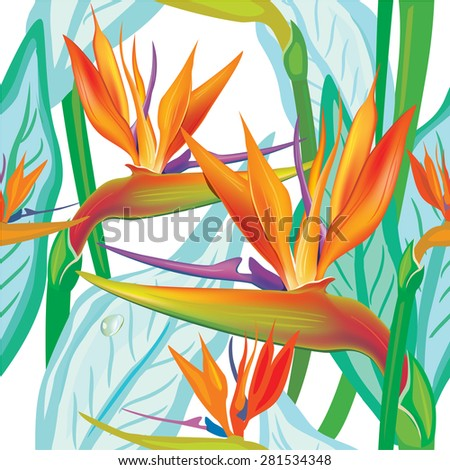 Seamless floral pattern with Strelitzia on white - stock vector