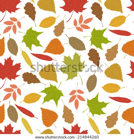 Seamless pattern of autumn leaves. Various veined leaves on white background. - stock vector