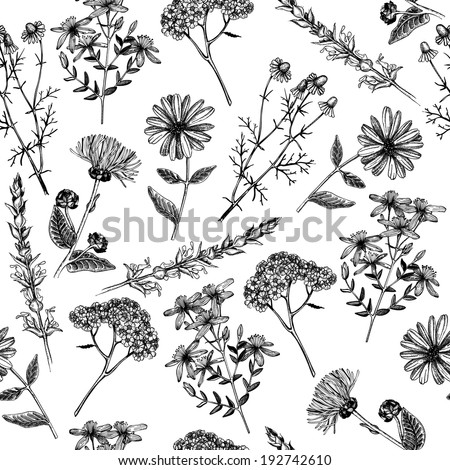 Seamless  pattern with ink hand drawn medicinal herbs and plants isolated on whit - stock vector