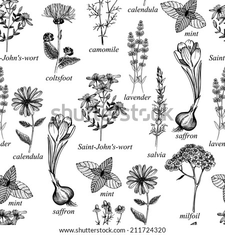 Seamless vector pattern with ink hand drawn medicinal herbs and flowers isolated on white background - stock vector
