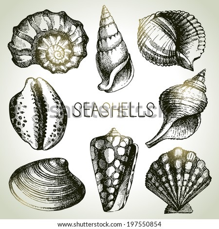 Seashells hand drawn set. Sketch design elements - stock vector