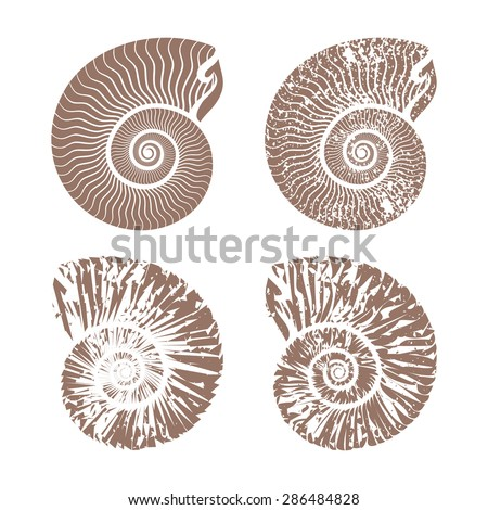 seashells nautilus vintage vector collection summer background illustration
