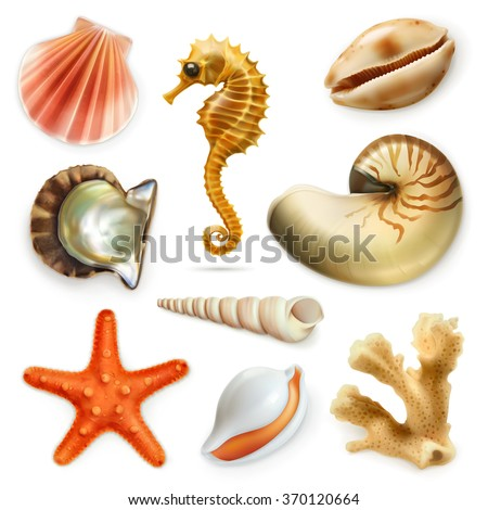 Seashells, vector icon set - stock vector