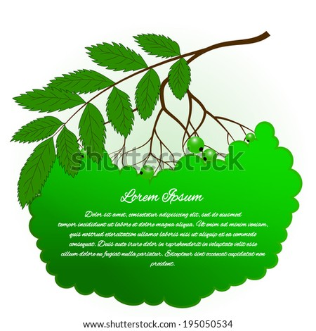 Season tree branch with green leaves. Fresh green leaves on white background. Vector illustration with green frame for text - stock vector