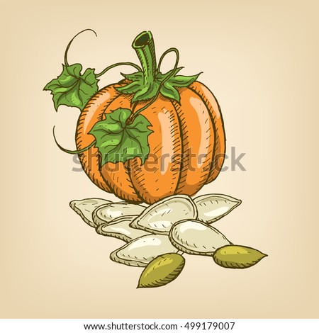 Seeds of a pumpkin with pumpkin. Vector illustration. Hand drawn illustration.