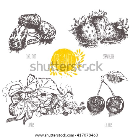 Series - vector fruit, vegetables and spices. Hand-drawn illustration in vintage style. Sketch. Healthy food. Linear graphic. Set of strawberry, cherry, date fruit, grapes. - stock vector