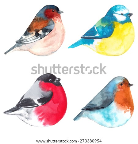 Set birds painted on watercolor paper. Etude birds on a white background. Vector birds - stock vector