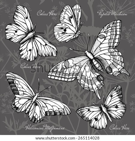 Set Butterflies, Colias Heos, Papilio Machaon, Heliconius Melpomene, Black & White