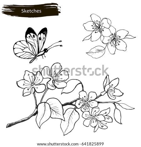 Set Drawing By Hands Spring Flowers Stock Vektorgrafik Lizenzfrei