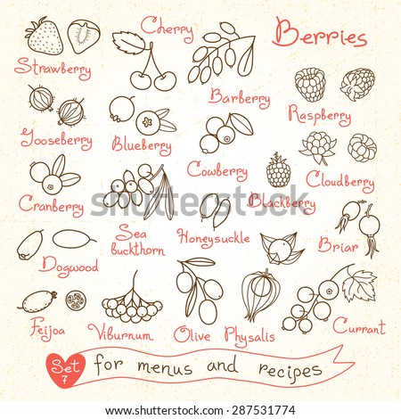 Set drawings of berries for design menus, recipes and packages product. Vector Illustration. - stock vector