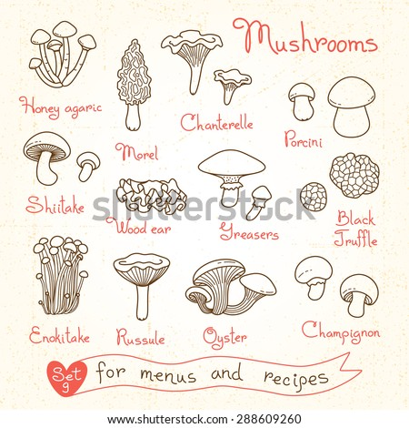Set drawings of mushrooms for design menus, recipes and packages product - stock vector