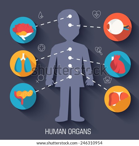 set flat human organs icons illustration infographic concept. Vector background design. Template for website and mobile appliance - stock vector