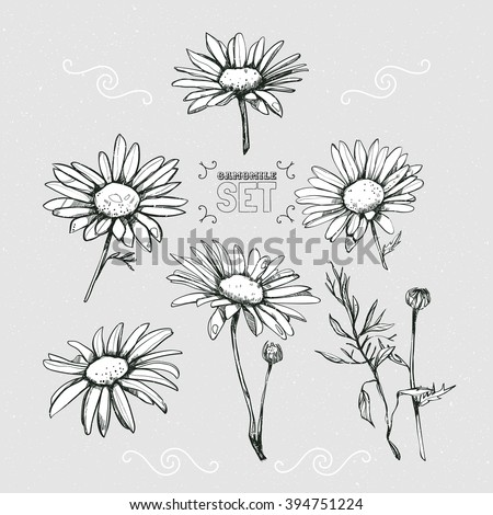 Set from several different chamomiles. Daisies hand-drawn. - stock vector