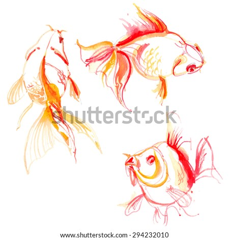 Set goldfish painted with watercolors. Study of fish. Vector