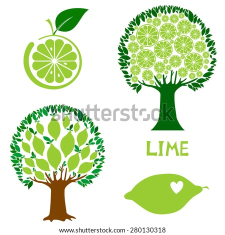set icon lime fruit isolated on White background. Vector illustration - stock vector