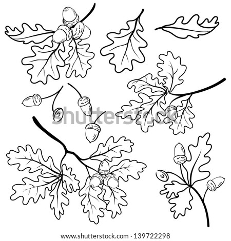 Set oak branches with leaves and acorns, black contour on white background. Vector - stock vector