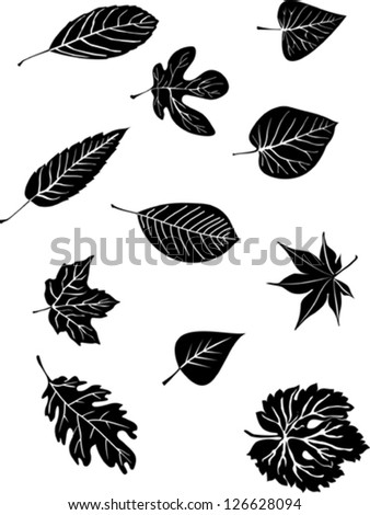 Set od various tree leaves - stock vector