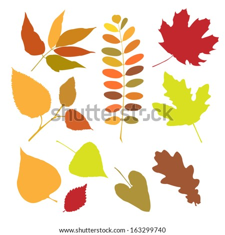 Set of a autumn leaves isolate - stock vector