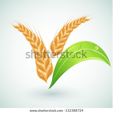 Set of agriculture design elements vector - stock vector