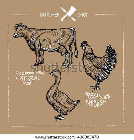 Set of animal cuts for butcher's shop. Animal silhouettes isolated on a chalkboard background, beef cow, goose, chicken. Vector illustration - stock vector