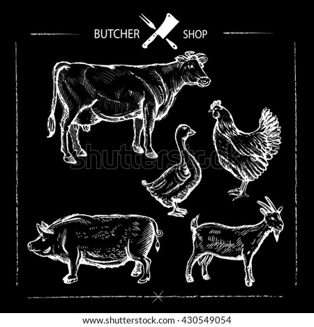 Set of animal cuts for butcher's shop. Animal silhouettes isolated on a chalkboard background, beef cow, goose, chicken, pork, goat .Vector illustration - stock vector