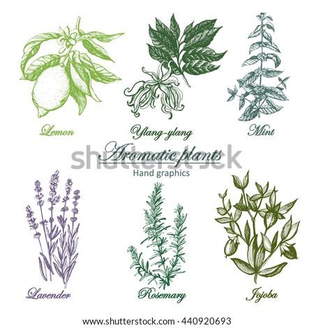 Set Aromatic Herbs I
